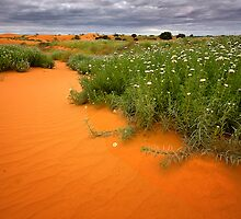 Perry Dunes in Spring - Perry Sand Dunes by Hans Kawitzki