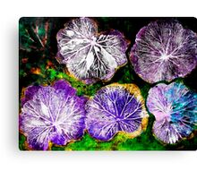 Novembers Garden 7 - Monoprint Canvas Print