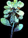 "Novembers Garden 9 - Monoprint by Belinda ""BillyLee"" NYE (Printmaker)"
