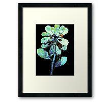 Novembers Garden 9 - Monoprint Framed Print