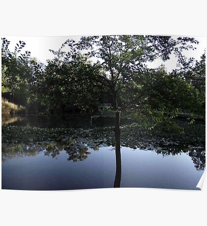 Lillypond Reflection Poster