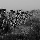 Monochrome Fence by Murray Wills