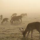 The Deer 5 by Mike Topley