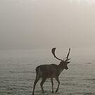 The Deer 6 by Mike Topley