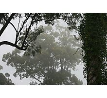 Fog Through the Trees Photographic Print