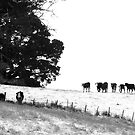 Cows in the Snow by Josie Jackson