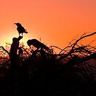Monkey Mia Sunset by warriorprincess