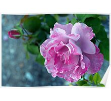 Mottled pink rose and bud Poster