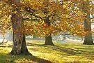 Autumn Path by CJTill