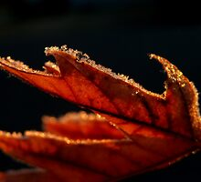 frosted Leaf by MistyAdkins