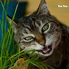 Cat grass by warriorprincess