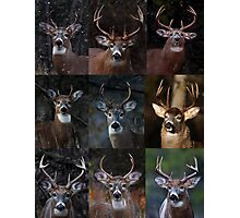 Group of nine - White-tailed Deer Photographic Print