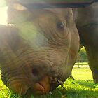 Rhino Close-Up by TomWright156