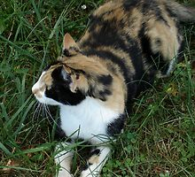 Calico on Green by superhorse