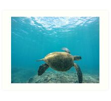 Honu - Turtle Summer  Art Print