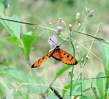 Butterfly Upside Down by DarthSuhas