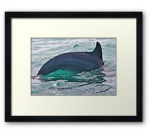 Green Water Dolphin Framed Print