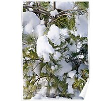 Snowy Evergreen Poster