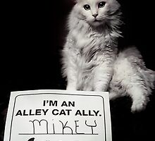 I'm an Alley Cat Ally by ibjennyjenny