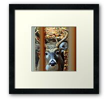Knock at Window Framed Print