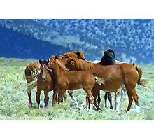 Mustang Buddies  Photographic Print