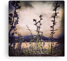 Wildflowers with Mountains in the Distance  Canvas Print
