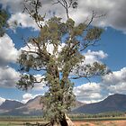 The Cazneaux Tree (HDR) , Flinders Ranges, South Australia by Adrian Paul