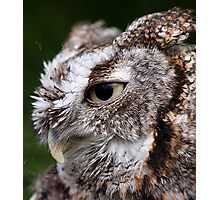 Screeching Owl Thoughts Photographic Print