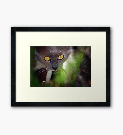 Lizard... What lizard! Framed Print