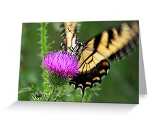 Flutter Greeting Card