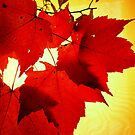 RED NOVEMBER by NatureGreeting Cards ccwri