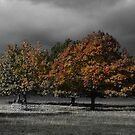 Autumn Under Dark Skies by SquarePeg