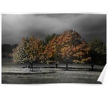 Autumn Under Dark Skies Poster
