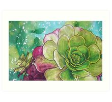 Succulent Rose Art Print