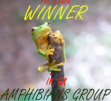 amphibians group challenge winner banner by elsha