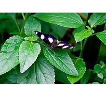 moth from the forest of india Photographic Print