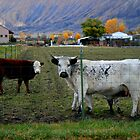 Colorado Farm Life  by sgarrityphotogr