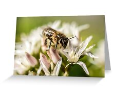 Pre Spring Bumble Bee Greeting Card
