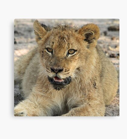 Otthawa lion cub(This is the life !) Canvas Print