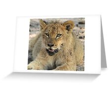 Otthawa lion cub(This is the life !) Greeting Card