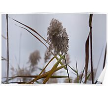 Tall Grass in Autumn Poster