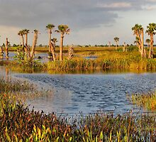 Golden Hour, Viera Wetlands, Florida by nancyb926