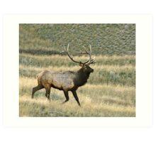 bull elk # 197 Art Print