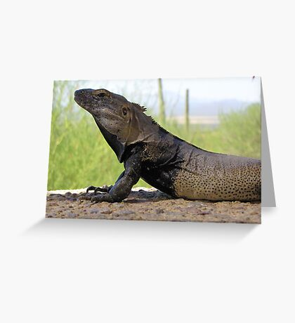 Sonoran Spiny-tailed Iguana ~ Profile Greeting Card