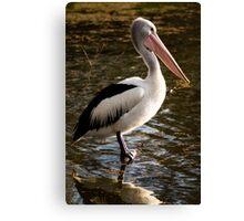 Pelican - Balyang Sanctuary Geelong  Canvas Print