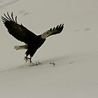 Flying Eagle - Dutch Harbor by Melissa Seaback