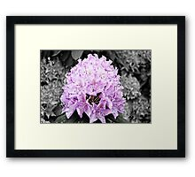 Rhododendron Framed Print