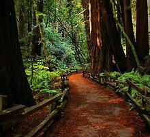 Walk Through Redwoods by Barbara  Brown