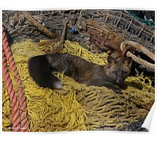 Resting Fox - Dutch Harbor Poster