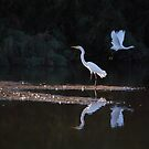 Egrets Ballet by Tam Ryan